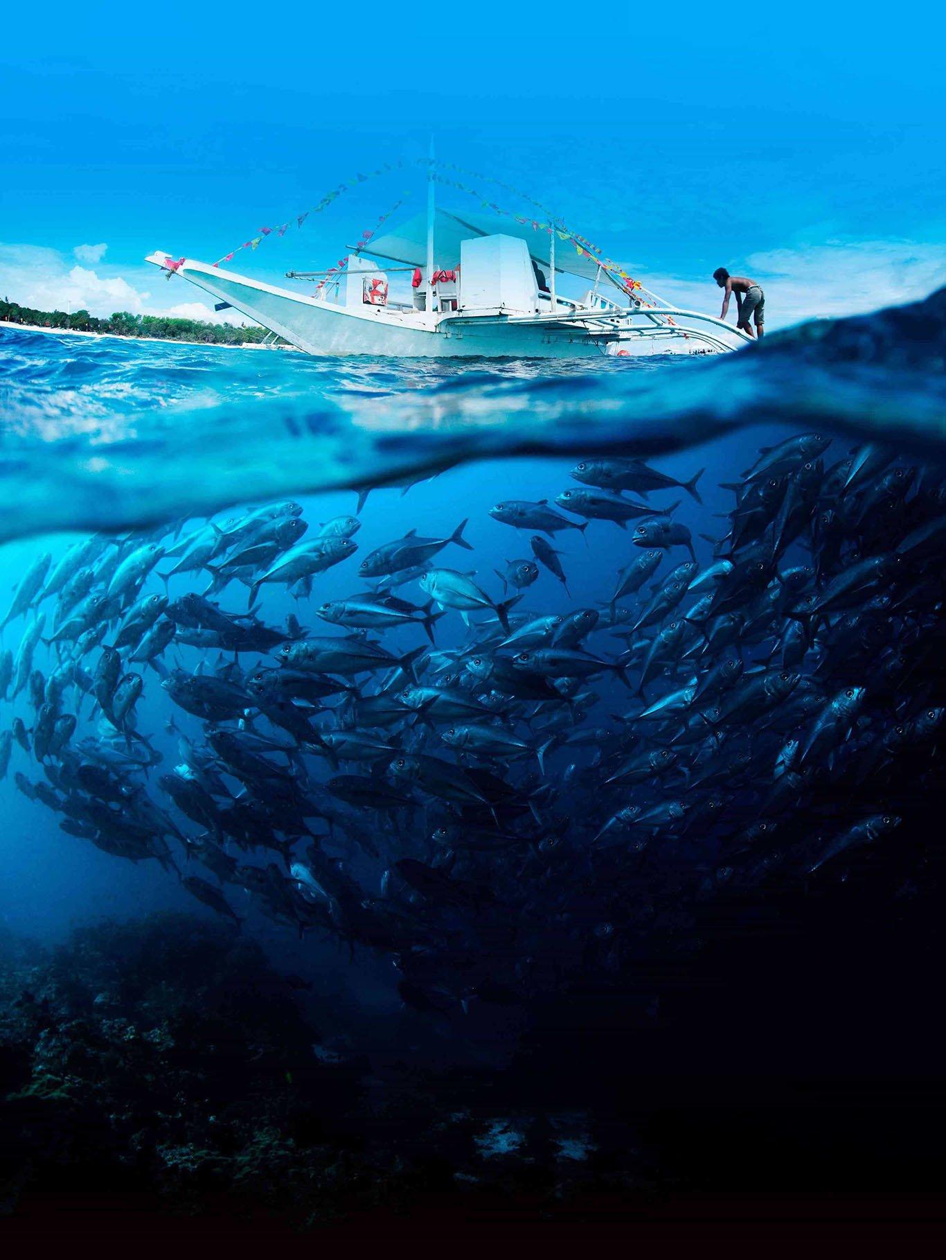Charter fishing cancun for Cancun fishing charters